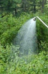 watering garden bed
