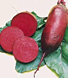 cylindra beet