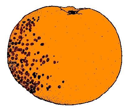 blemished fruit