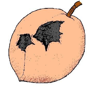 fruit chewed