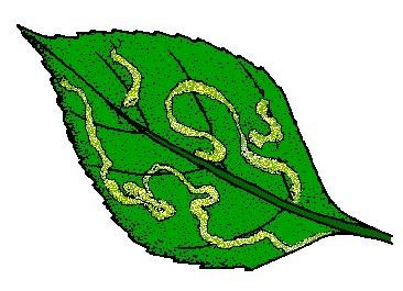 leaf has tunnel marks